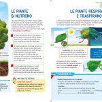 Proprietà delle piante