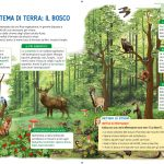 Ecosistema di terra: il bosco