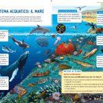 Ecosistema acquatico: il mare