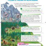 Illustrazioni editoria scolastica Ambiente Montagna