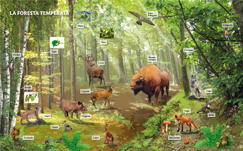 Biomi: prova per illustrazione scolastica